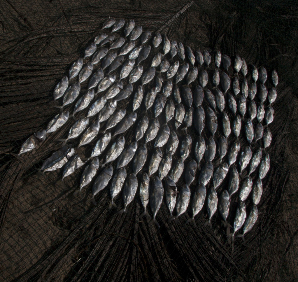 Shunya Chi - Food - Fish abstraction