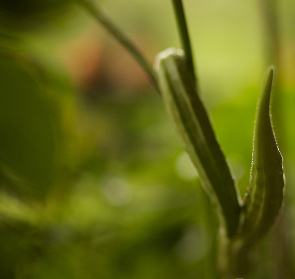 Shunya Chi - Food - Garden Plant